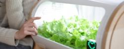 Pěstovat zeleninu můžete už i doma, a to prostřednictvím univerzálního japonského vynálezu