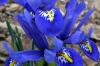 Vneste do své zahrady trochu života. Tyto květy vás skvěle připraví na příchod jara