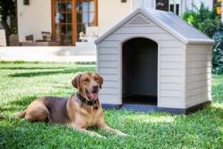 Čím se řídit při zařizování bydlení pro vašeho zvířecího mazlíčka?