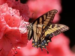 Nápadité barvy, které nabijí vaši zahradu povzbuzující energií