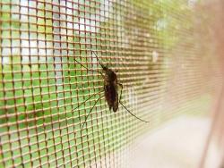 Nastává ten správný čas vybrat sítě proti hmyzu